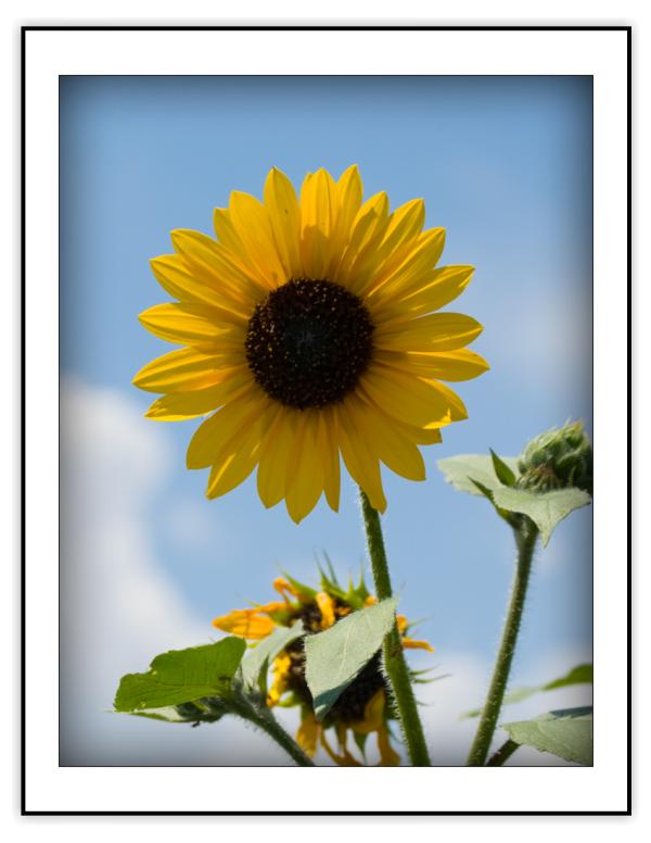 Note Cards: Botanicals I